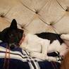 モコちゃん、ソファーでまったり♪