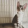 【開催決定】猫ちゃんの里親譲渡会IN高井戸・杉並