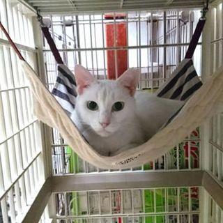 ツンデレの真っ白猫さん