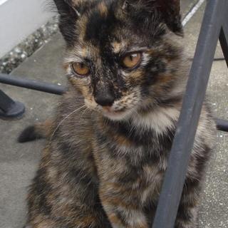 サビ猫だけが売れ残ってしまいました。