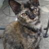 サビ猫だけが売れ残ってしまいました。 サムネイル2