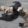 サビ猫だけが売れ残ってしまいました。 サムネイル3