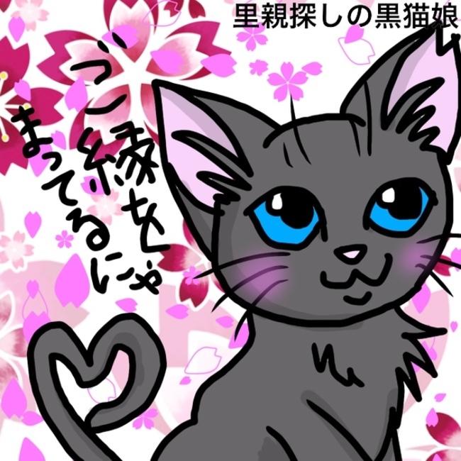 里親探しの黒猫娘のカバー写真