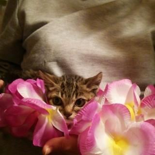 美猫です。家族にしてください!