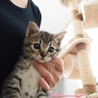 お目目くりくり可愛いキジトラ子猫♪