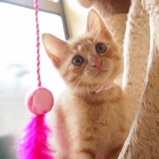 綺麗な茶トラ子猫♪
