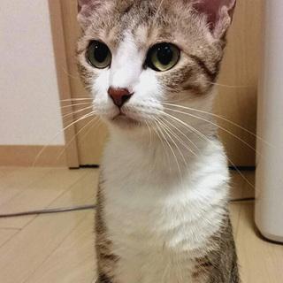 人慣れ最高!美顔のレディ猫