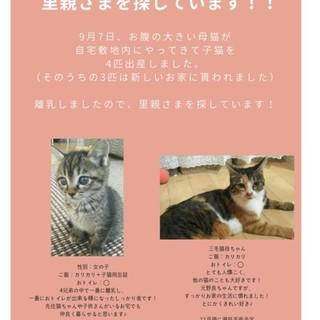 道南方面:9月4日生まれの子猫♀&母猫の里親募集