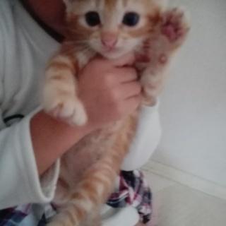 生後1ヶ月半の子猫ちゃん4匹(*^^*)