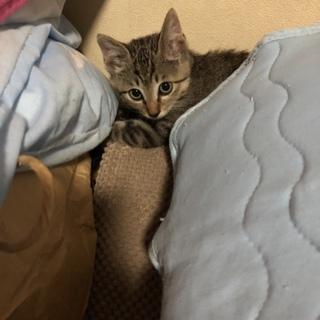 イケメンな二ヶ月の子猫ちゃん