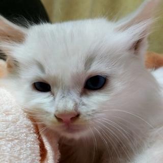 台風が連れてきた白猫。