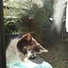 外猫の里親さん探しは、出来ますでしょうか?