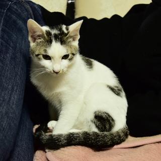 色白美猫女子 名古屋から