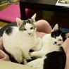 色白美猫女子 名古屋から サムネイル2