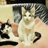 色白美猫女子 名古屋から サムネイル3