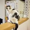 色白美猫女子 名古屋から サムネイル4