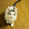 色白美猫女子 名古屋から サムネイル6