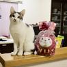 色白美猫女子 名古屋から サムネイル7