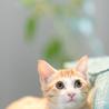 抱っこ大好きな3か月の元気なオス猫