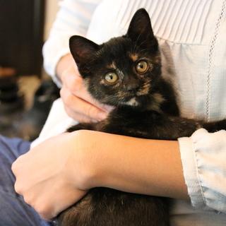 かわいくかしこい黒さび子猫です