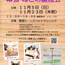 千葉県千葉市「 幕張 ねこの譲渡会」動物病院で開催です