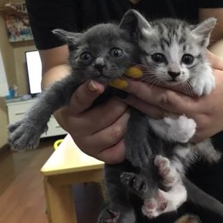 高知県で子猫の里親募集しています!