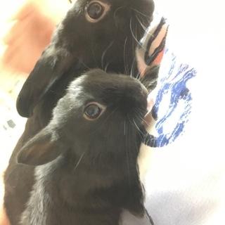 子ウサギ(生後2ヶ月)