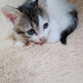 生後1ヶ月半の子猫です!