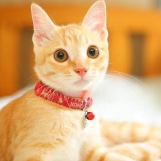 ☆代理☆猫の親子里親募集 1匹だけでも構いません