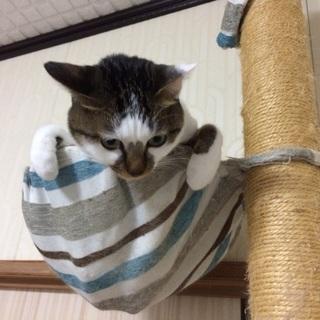 人懐っこい雑種猫