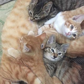 【里親募集】子猫五匹の里親さん募集