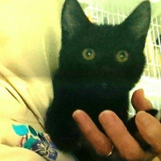 甘えん坊の黒猫です。