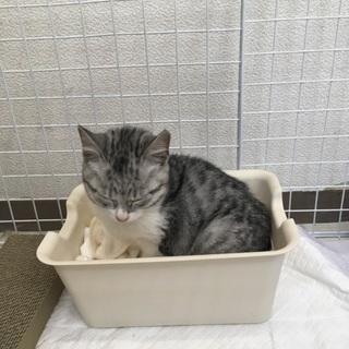 生後2ヶ月くらいの仔猫ちゃん♬
