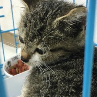 生後1ヶ月半くらいの仔猫ちゃん♬