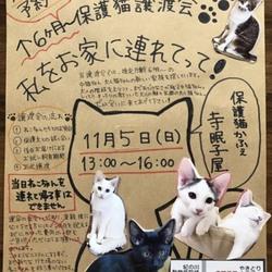猫の譲渡会 ♡ 保護猫かふぇ寺眠子屋