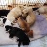 子犬がたくさん!お昼寝中★
