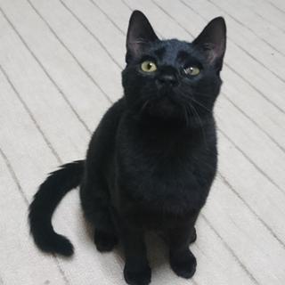 左目に炎症がある、黒ネコあんこ