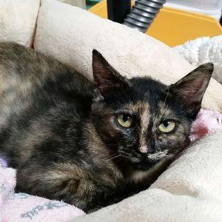 錦糸町幸子、人にも猫にも優しい控え目なサビ猫