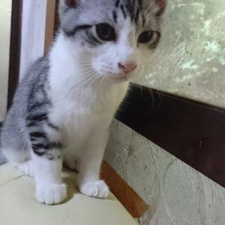 県外の方も是非お願いします!三月生まれの子猫2匹