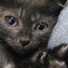 謎の黒子猫を保護しました