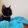 生後2カ月黒猫♂
