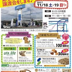 猫の譲渡会  ネッツトヨタ南国