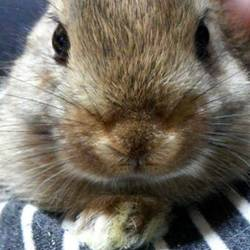 ウサギの保険