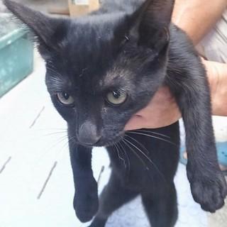 黒猫のメス子猫です!甘えん坊です。