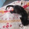 動画あり お膝大好き黒猫ぼにーちゃん サムネイル4