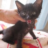 動画あり お膝大好き黒猫ぼにーちゃん サムネイル5