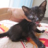 動画あり お膝大好き黒猫ぼにーちゃん サムネイル6