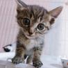 生後約1ヵ月 とても可愛らしい甘えん坊子猫☆