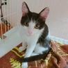 生後約3ヵ月 とても可愛らしい甘えん坊子猫☆