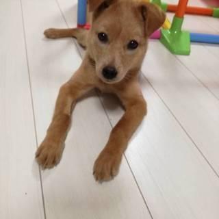 ☆マッチング決定☆みかんちゃん☆子犬